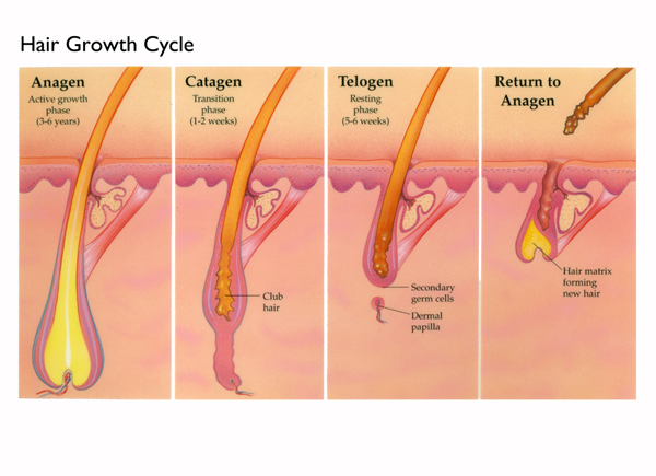 what helps regrow frontal hair